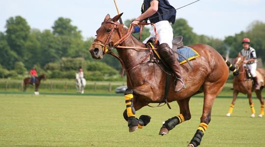 Polo competition - July - August  2021