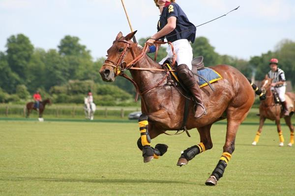 Polo competition - July - August  2020